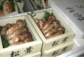 秋の味覚 松茸 北朝鮮産 要注意 核ミサイル 金正恩 贅沢生活 吉林省産 安い.png