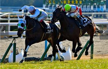 JRA 夏競馬 降級馬制度 廃止 2018 4歳馬 勝ち得 わかりにくい.png