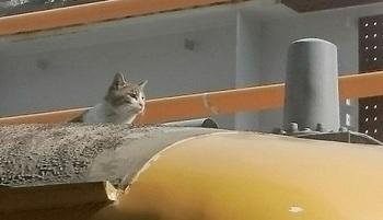 JR広島駅 電車の上 猫 電車遅れる.jpg